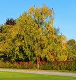树在一个公园在秋天 免版税库存照片