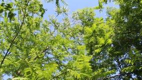 树在一个大风天英尺长度的森林里