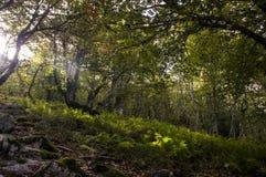 树在一个惊人的森林里 免版税库存图片