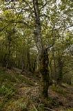 树在一个惊人的森林里 免版税图库摄影