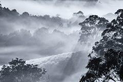树在一个有薄雾的早晨 库存图片