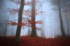 树在一个有雾的森林里 免版税图库摄影