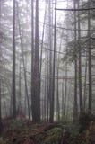 年轻树在一个有雾的森林里 库存图片
