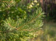 树在一个森林里本质上 库存图片