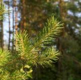 树在一个森林里本质上 免版税库存图片