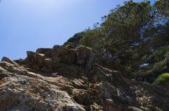 树在一个石倾斜增长 免版税库存照片