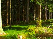 树在一个绿色森林里 免版税库存图片