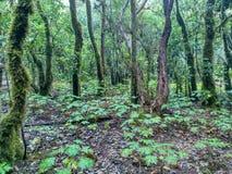 树在一个豪华的森林里 免版税库存照片