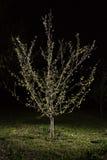 树在一个绿色领域的夜 免版税库存图片