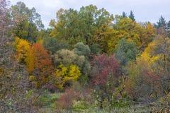 树在一片五颜六色的叶子 库存图片