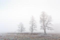 树在一片冷的有雾的冬天草原环境美化 库存图片