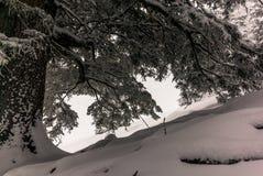 树在下的瑞士阿尔卑斯大雪在冬天- 15 免版税图库摄影