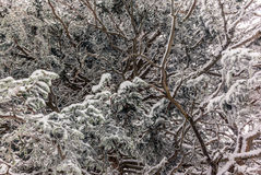 树在下的瑞士阿尔卑斯大雪- 18 免版税库存照片