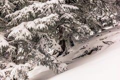 树在下的瑞士阿尔卑斯大雪- 13 库存图片
