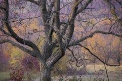 树在与分支和颜色的秋天 免版税库存图片