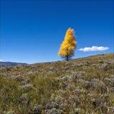 树在与拷贝空间的秋天 库存图片