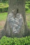 树在与爱词组的心脏形状切开了 库存图片