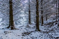 树在与雪的冬天 免版税库存照片