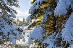 树在与雪的冬天 图库摄影