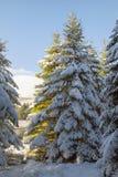 树在与雪的冬天 免版税图库摄影