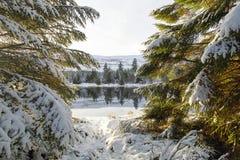 树在与雪的冬天 库存照片