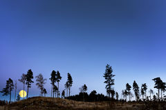 树在与满月的晚上 免版税库存照片