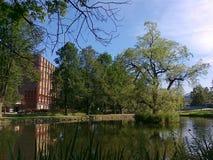 树在中间池塘在夏天 免版税图库摄影