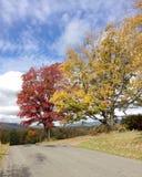 树在乡下公路的秋天 免版税库存照片