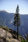 树在优胜美地瀑布顶部 库存图片