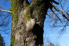 树在俄勒冈 图库摄影