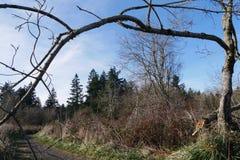 树在俄勒冈 库存图片