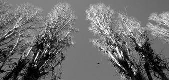 树在傲德萨,乌克兰 库存图片