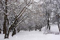 树在公园在冬天 它` s下雪 免版税库存图片