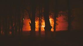 树在公园在晚上 股票视频