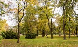 树在公园在秋天 库存图片