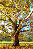 树在公园在晴朗的秋天天 库存图片