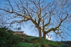 树在公园金塔da Regaleira 免版税图库摄影