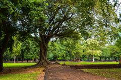 树在公园 库存照片