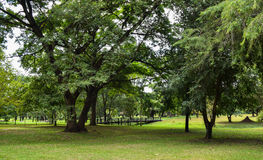 树在公园 图库摄影