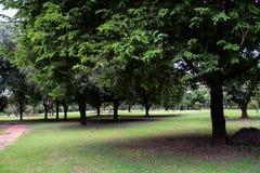 树在公园 免版税库存照片