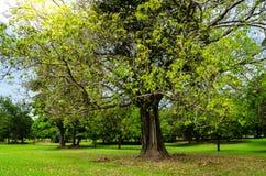 树在公园 免版税库存图片