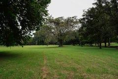 树在公园 库存图片
