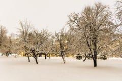 树在冬天公园在夜之前 库存照片