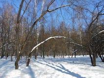 树在冬天公园 图库摄影