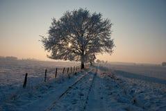 树在冬天早晨 库存照片