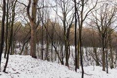 树在冬天森林里 免版税库存图片