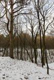 树在冬天森林里 库存图片