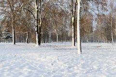 树在冬天森林里 库存照片