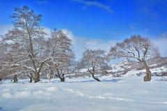 树在冬天罗马尼亚 库存图片