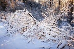 树在冬天风暴以后的多雪的森林里 免版税库存照片